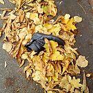 shoe lost in leaves by H J Field