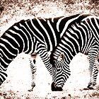 In Harmony - Zebra  by ©FoxfireGallery / FloorOne Photography