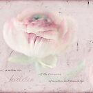 Ranunculus Single by JulieLegg