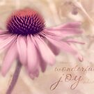 Garden Coneflower by JulieLegg