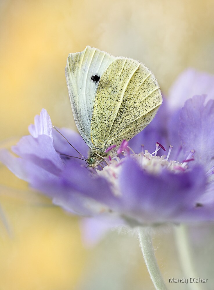 Butterfly by Mandy Disher
