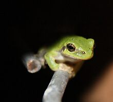 Frogger by Cassie Jahn