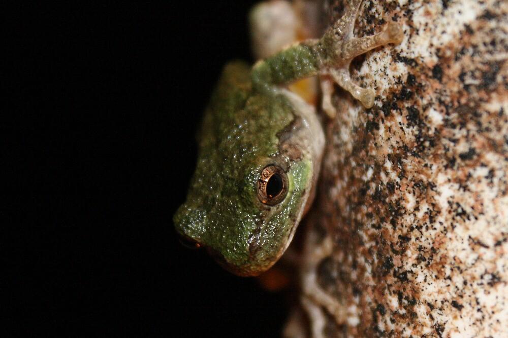Froggy by Cassie Jahn