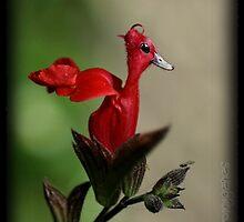 Duck by Neutro
