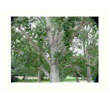 Beautiful Shade Tree Art Print