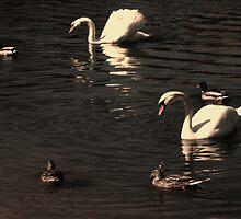 Calm swim by Orangic