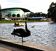 Paddle Boats & Swans by Cherie Vivar