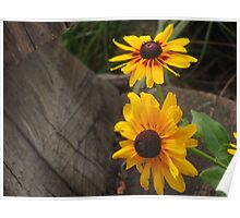 """Brown Eyed Susans By Stump"" Poster"