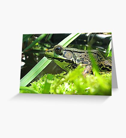 A Profile of Frog Greeting Card