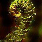 fractal fern by lastgasp