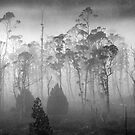 Cradle Mountain morning mist. by Victor Pugatschew