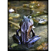 Yoga Frog Photographic Print