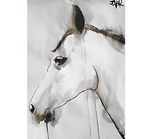 equine Photographic Print