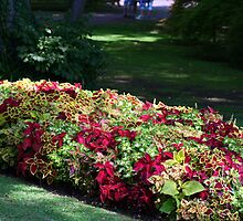 Beautiful Coleus Bush - Sigurtà - Italy by sstarlightss
