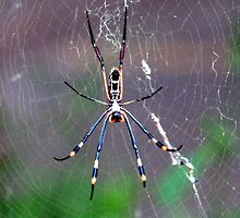 Only a spider..a Golden orb-web spider! by Elizabeth Kendall