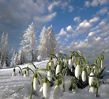 February Fair-Maids by Igor Zenin