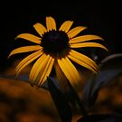 Night Bloom by Vivienne Gucwa