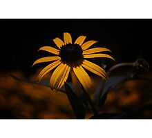 Night Bloom Photographic Print