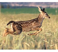 August Fawn Photographic Print