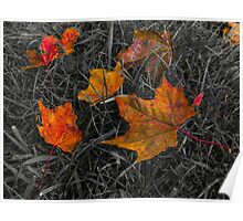 Autumn Colors - Leafs on the grass Poster