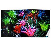 color vibrancy  Poster