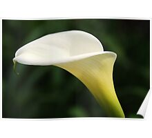 Profile of a Lily Poster