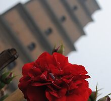 Big Wild Goose Pagoda Rose by Christopher Colletta