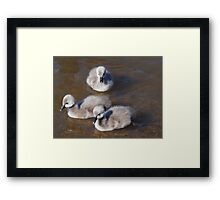 Just We Three ! Framed Print