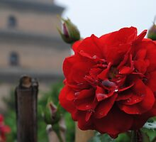 Big Wild Goose Pagoda Rose II by Christopher Colletta