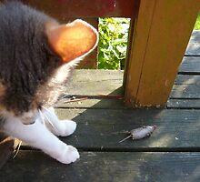 Cat after the Mouse by Hekla Hekla