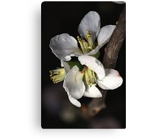 Blossoms Canvas Print