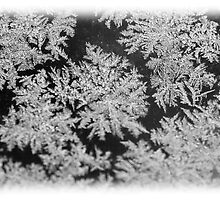 Frost Crystals by Mark Johnson