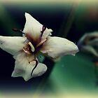 """""""It is at the edge of a petal that love waits."""" by Kat de la Perrelle"""
