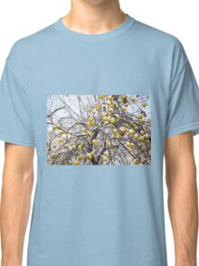 apples sag on tree in snow Classic T-Shirt