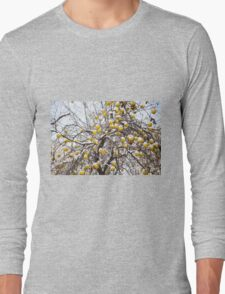 apples sag on tree in snow Long Sleeve T-Shirt