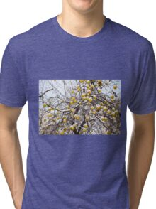 apples sag on tree in snow Tri-blend T-Shirt