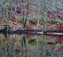 reflection by davidautef