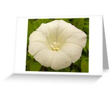 White weed Greeting Card