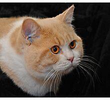 Feline Elegance Photographic Print