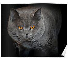 Fierce Feline Poster