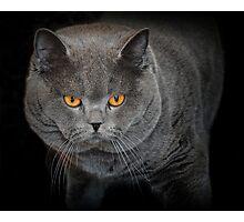 Fierce Feline Photographic Print