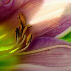 Lilly Color Essence! by PatChristensen