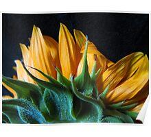 Backside Sunflower Poster