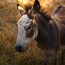 Madam Donkey by sbc7