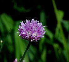 purple by 24Flowers
