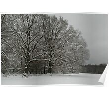 Snow in the pasture Poster