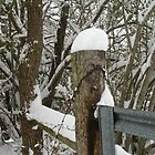 Snow covered fence by nrsedude