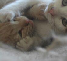 Playful Kittens by SarahMc11