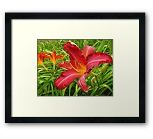Singled Out! Framed Print