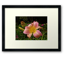A Single Flower  Framed Print
